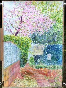 アトリエの八重桜