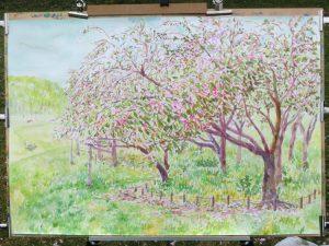 公園の八重桜