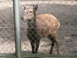 境内で飼われている鹿