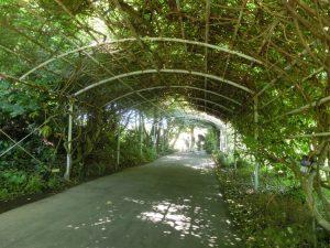 植物のトンネル