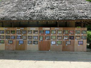 野鳥の写真の展示