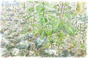 庭の植物のスケッチ