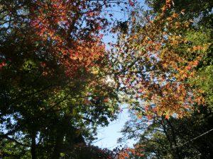 神社近くの木々