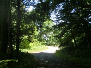 林道の雰囲気