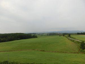一面のソバ畑