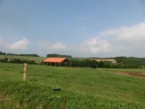 牛の放牧地
