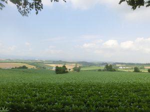 丘から見える風景