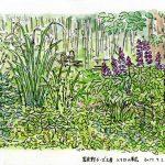 富良野チーズ工房:入り口の草花を描きました。