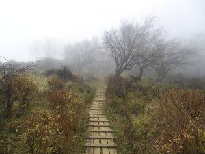霧がかかってきた